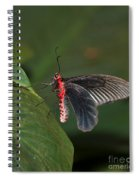 Common Rose Butterfly Spiral Notebook