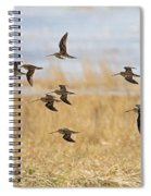 Common Snipe Spiral Notebook