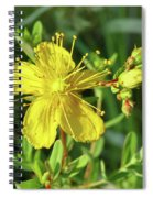 Common St. John Spiral Notebook