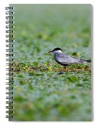 Common Tern Spiral Notebook