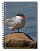 Common Tern... Spiral Notebook