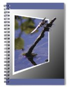 Common Whitetail Spiral Notebook