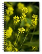 Common Wintercress Flowers Spiral Notebook