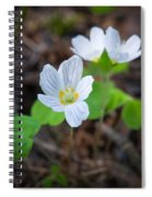 Common Wood Sorrel Spiral Notebook
