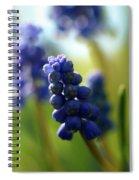 Compact Grape-hyacinth 2 Spiral Notebook