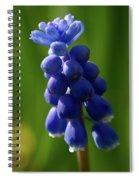 Compact Grape-hyacinth Spiral Notebook