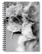 Conch In The Surf Spiral Notebook