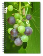 Concord Grapes On The Vine Spiral Notebook