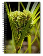 Cone Of Green Spiral Notebook
