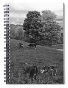 Congregating Cows. Jenne Farm Cow Reading Vermont Black And White Spiral Notebook