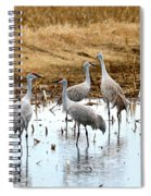 Congregating Sandhill Cranes Spiral Notebook