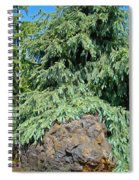 Conifer Tree Art Prints Pine Trees Botanical Nature Baslee Troutman Spiral Notebook