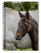 Connemara Foal Spiral Notebook