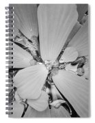 Conservatory Nature In Black And White 1 Spiral Notebook