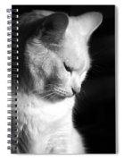 Contempation  Spiral Notebook