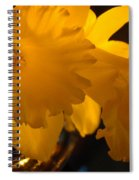 Contemporary Flower Artwork 10 Daffodil Flowers Evening Glow Spiral Notebook