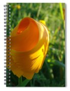 Contemporary Orange Poppy Flower Unfolding In Sunlight 10 Baslee Troutman Spiral Notebook