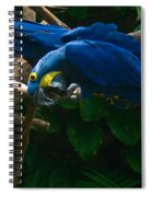 Contorted Parrots Spiral Notebook