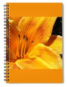 Contours To Admire Spiral Notebook