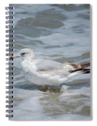 Cool Calm Spiral Notebook