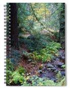 Cool Creek On Mt Tamalpais Spiral Notebook