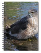 Cooper's Hawk Spiral Notebook