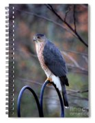 Coopers Hawk In Autumn Spiral Notebook