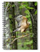 Coopers Hawk In New Hampshire Spiral Notebook