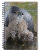 Cooper's Hawk In Stream Spiral Notebook