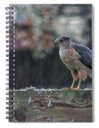 Cooper's Hawk In The Rain Spiral Notebook