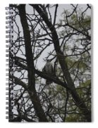 Cooper's Hawk Perched In Tree Spiral Notebook