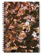 Copper Beech Spiral Notebook