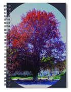 Copper Birch Spiral Notebook