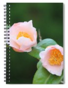 Coral Camellia 2 Spiral Notebook
