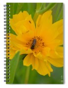 Coreopis Honey Bee Spiral Notebook