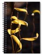 Corkscrew Willow Spiral Notebook