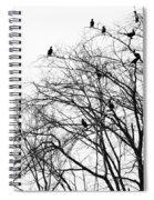 Cormorants Spiral Notebook