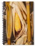 Corn Cobb On Stalk Spiral Notebook