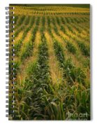 Corn Field Spiral Notebook