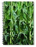 Corn Field's First Row Spiral Notebook