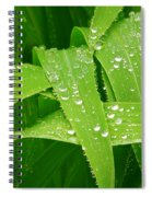 Corn Leaves After The Rain Spiral Notebook