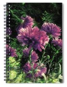 Cornflowers Autumngraphy - Photopainting Light Spiral Notebook