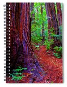 Cosmic Redwood Trail On Mt Tamalpais Spiral Notebook