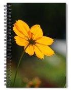 Cosmos Field Spiral Notebook