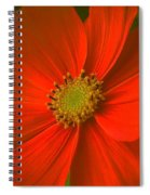 Cosmos Spiral Notebook