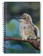 Costa's Hummingbird - Square Spiral Notebook