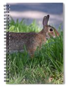Cottontail Rabbit In My Front Yard Spiral Notebook
