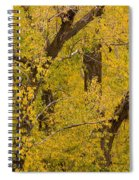 Cottonwood Fall Foliage Colors Spiral Notebook