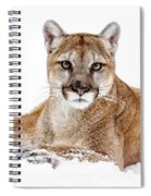 Cougar On White Spiral Notebook