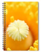 Coulter's Poppy 5 Spiral Notebook